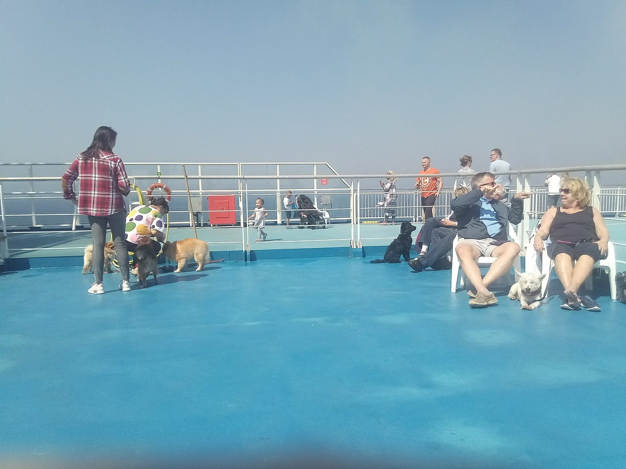 ferry_pet-deck